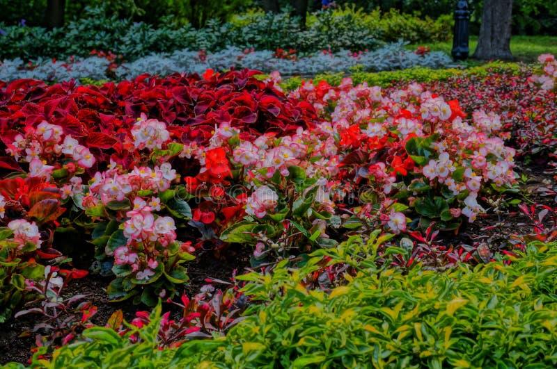 arboreta Ekaterinburg 2018 august miejsce mieć odpoczynek fotografia stock