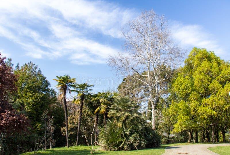 Arboreto bonito do parque da mola em Sochi, fundado pelo dramaturgo imagem de stock