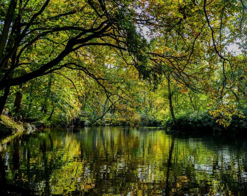 Arboreto de Winkworth fotografia de stock royalty free
