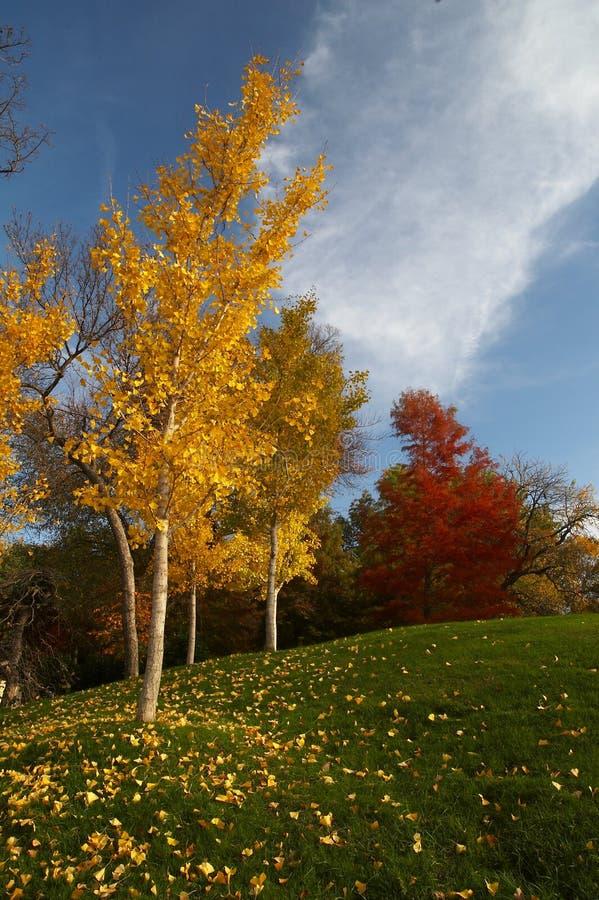 Arboreto di Dallas fotografia stock