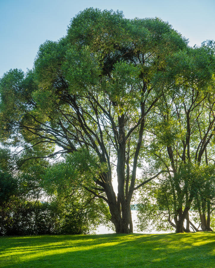 Arboreto em Tampere fotografia de stock royalty free