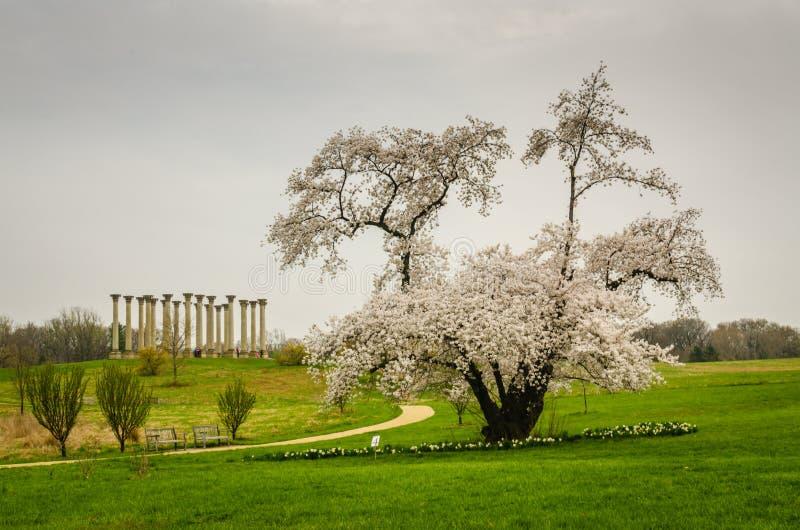 Arboreto nacional de Estados Unidos - Washington DC imagen de archivo