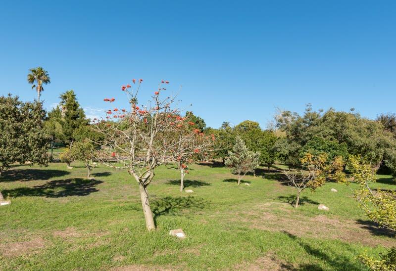 Arboretum på den Majik skogen i Durbanville i den västra udden arkivbild