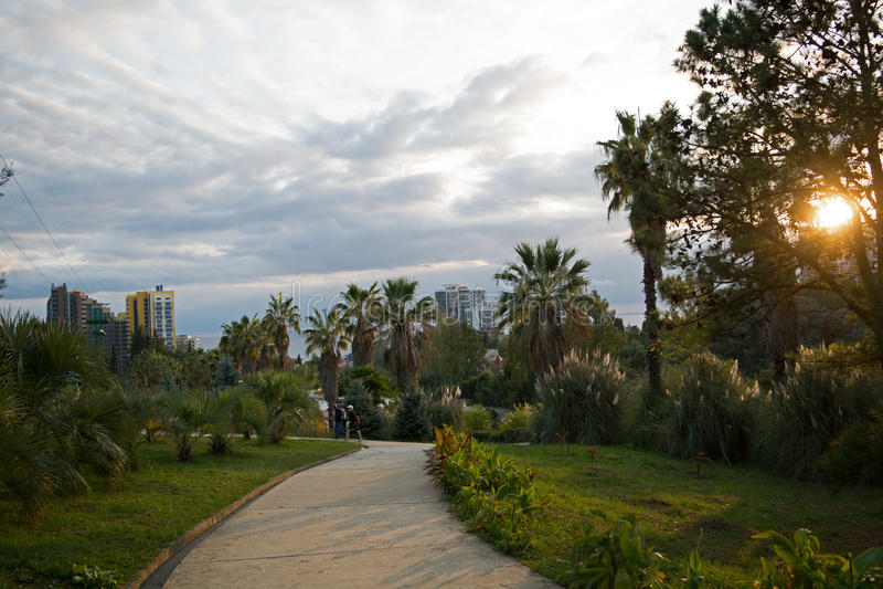 Arboretum w Sochi obrazy royalty free