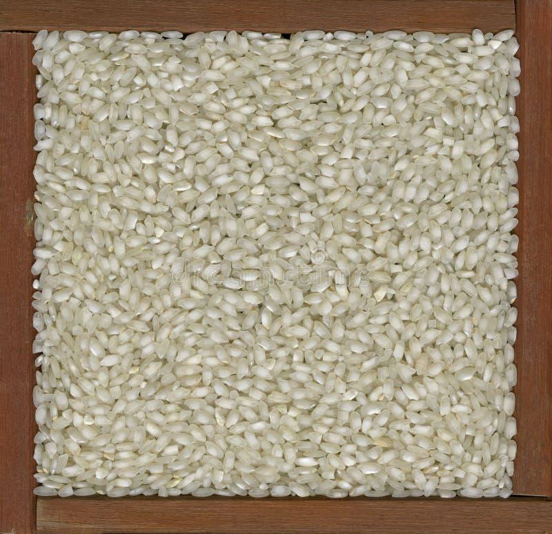 Arborio rice background stock image