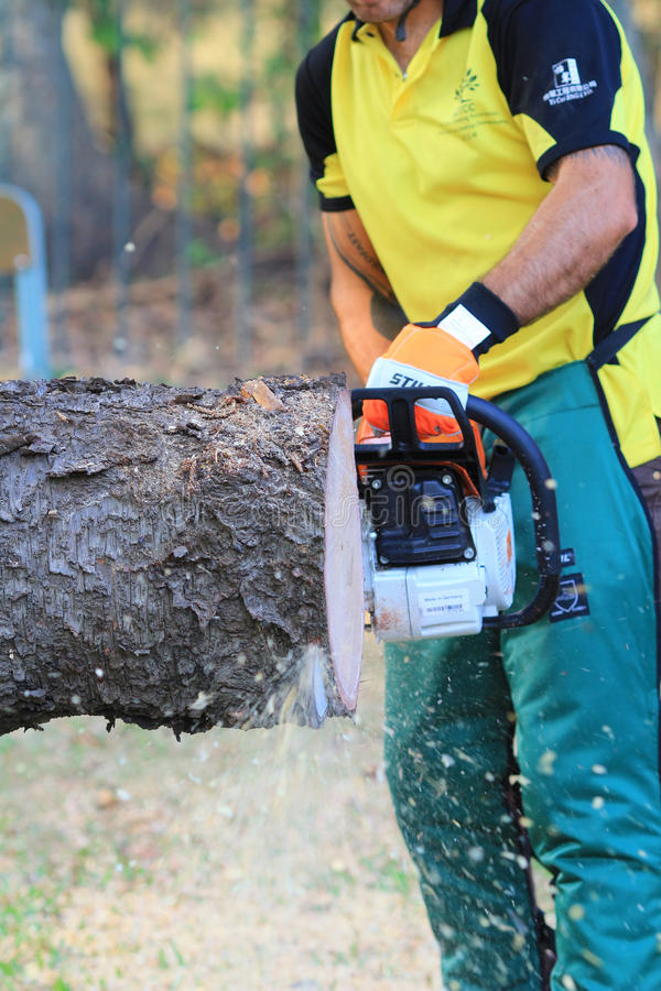 Arborist cutting a tree with a chainsaw stock image