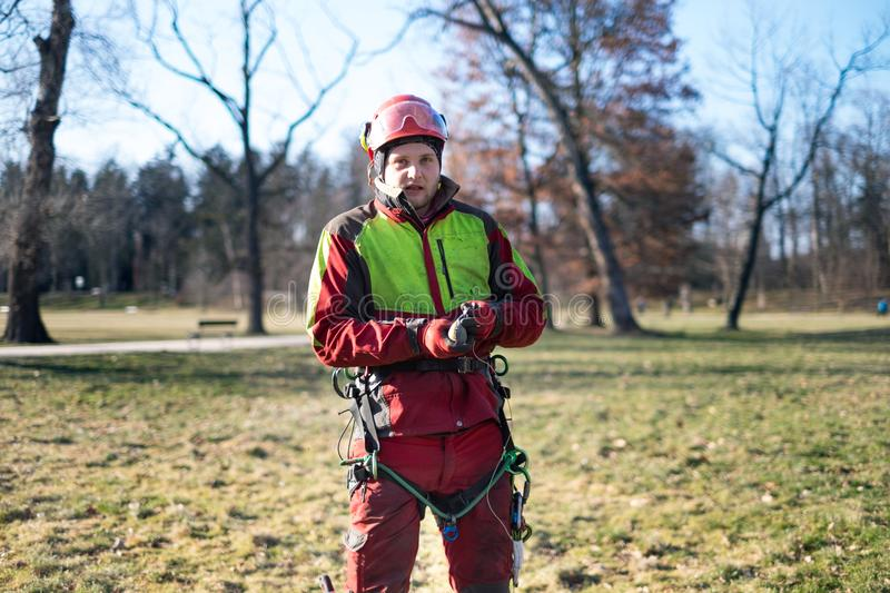 Arborist men standing against two big trees. The worker with helmet working at height on the trees. Lumberjack working with ch stock image