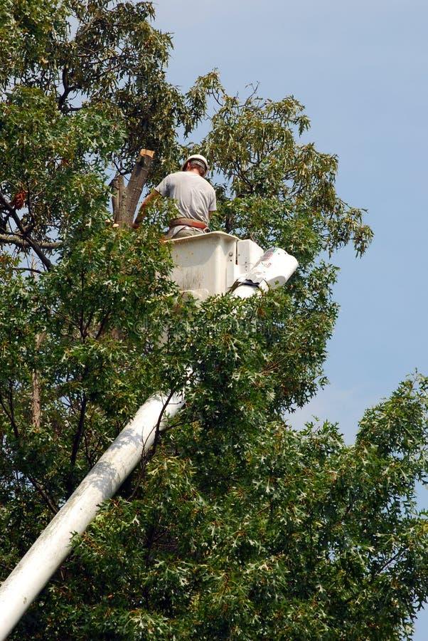 Arborist In orde makende Boom stock foto's