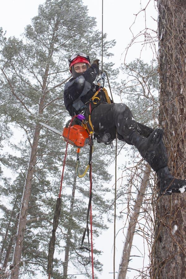 Arborist piłowania drewniana piła łańcuchowa przy wzrostem w śnieżycy zdjęcia stock