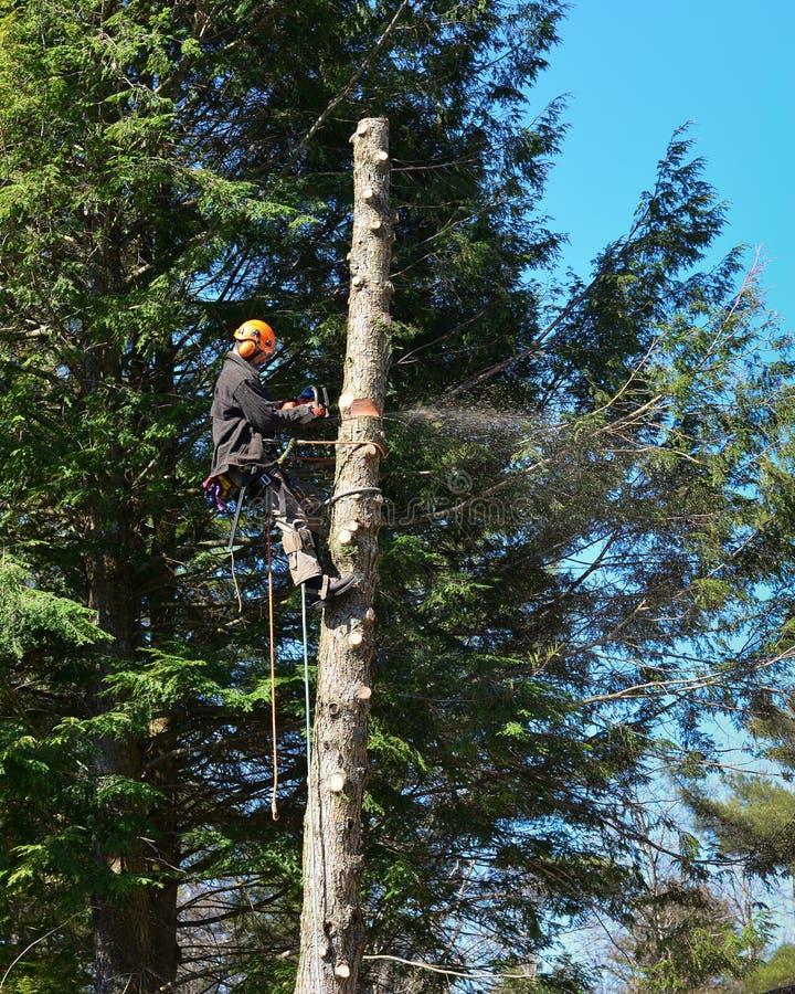 Arborist sawing tree stock photo