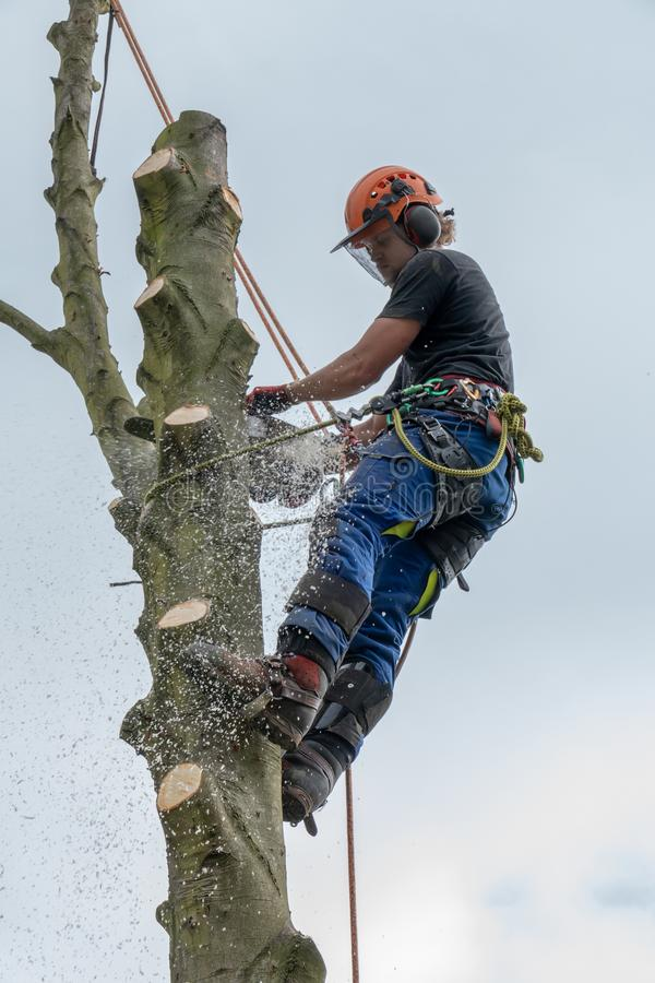 Arborist on tree stem using a chainsaw stock photography