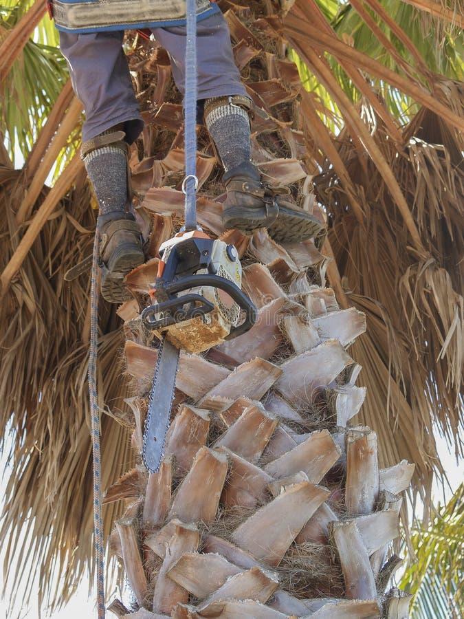 Arborist w górę drzewa zdjęcia stock