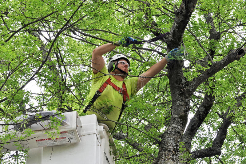Arborista profesional Working en árbol grande imagen de archivo