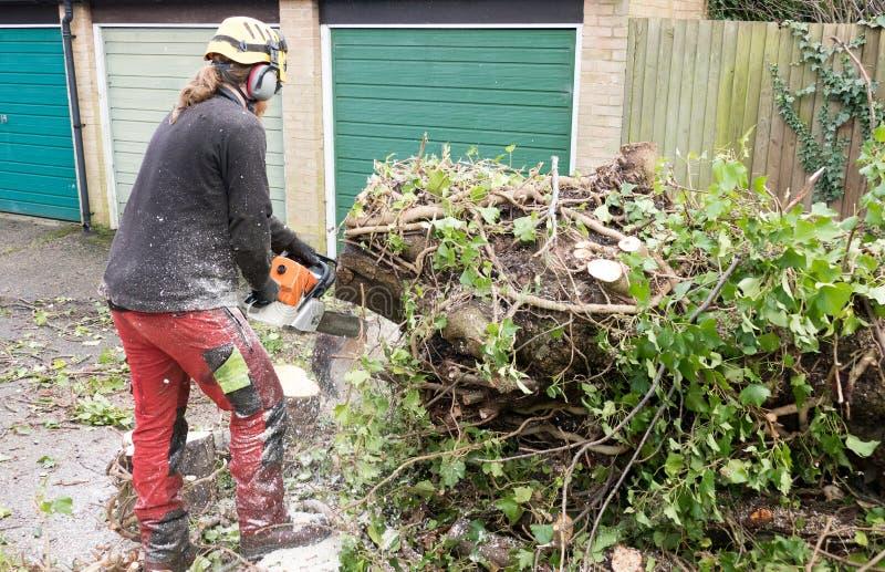 Arborista que usa una motosierra en un árbol fotografía de archivo libre de regalías