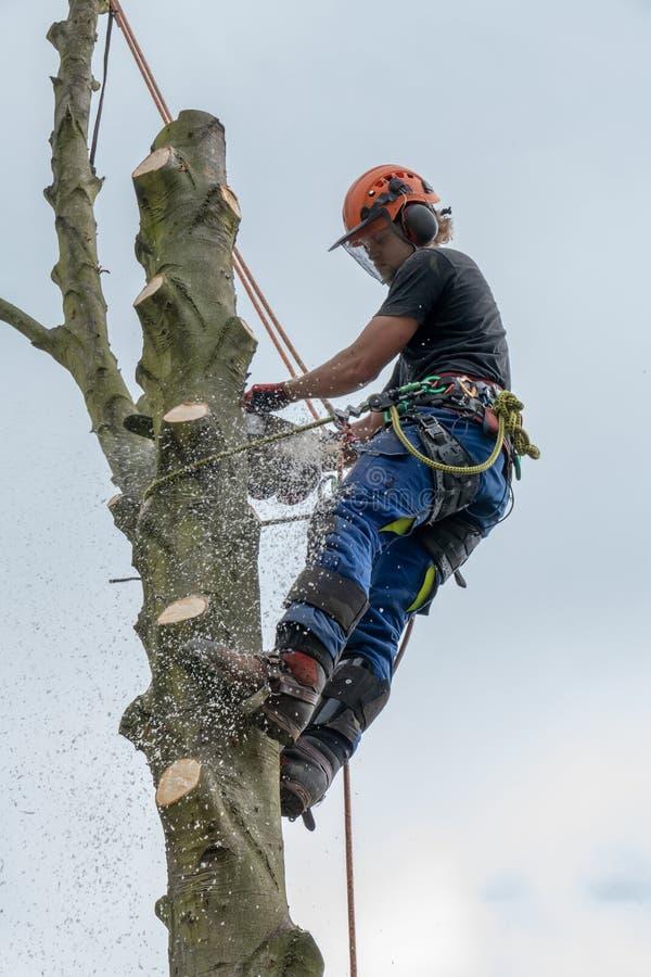 Arboriste sur la tige d'arbre utilisant une tronçonneuse photographie stock