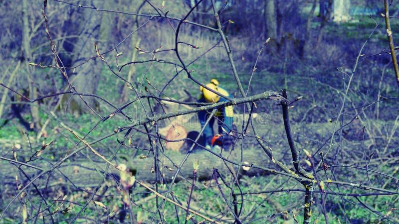 Arboristika foto de stock