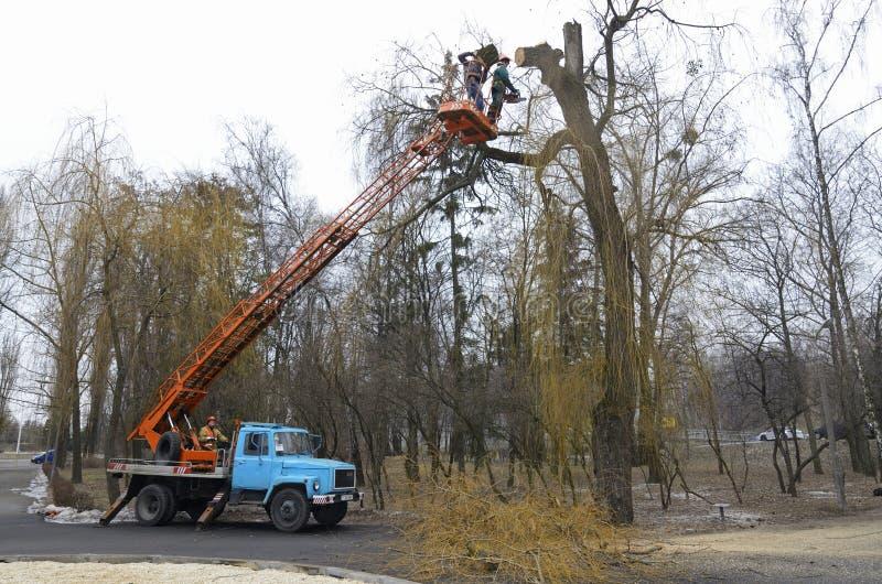 Arborists besnoeiingstakken van een boom die vrachtwagen-opgezette lift met behulp van stock fotografie