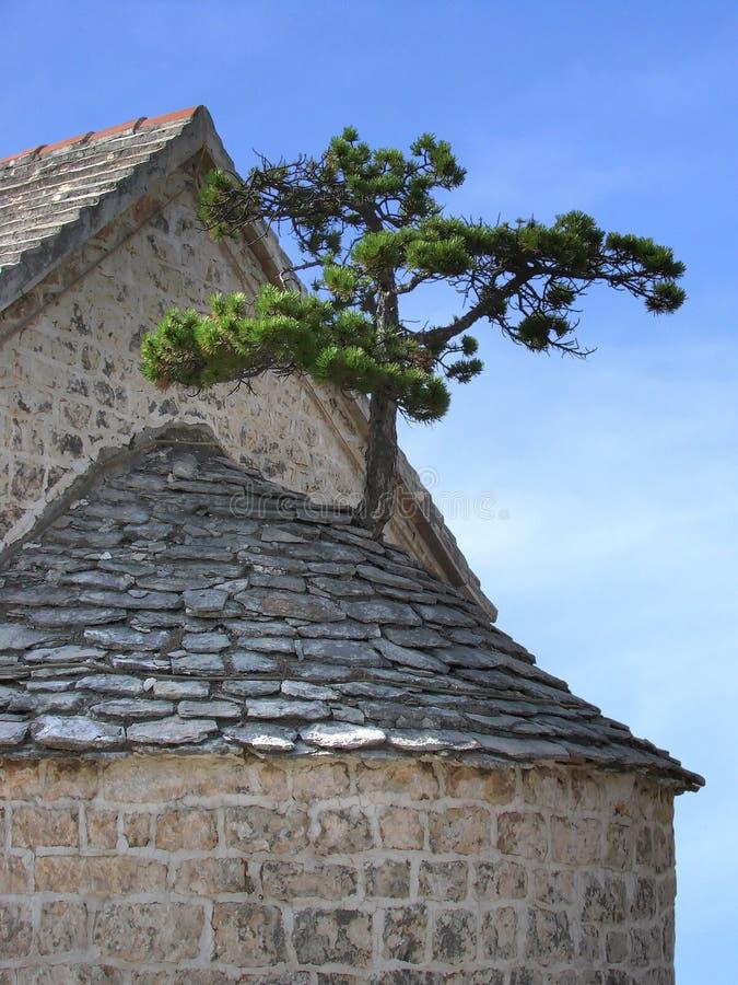 arbre à l'extérieur en pierre photos stock