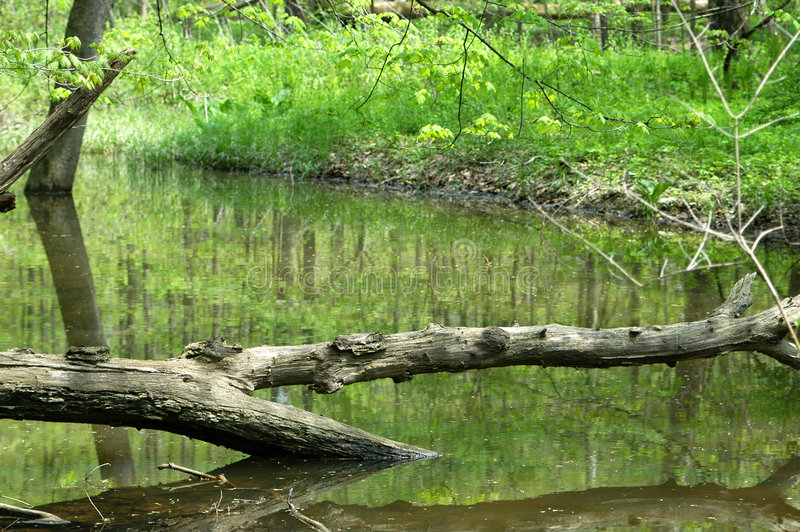 Arbre à travers l'eau image stock