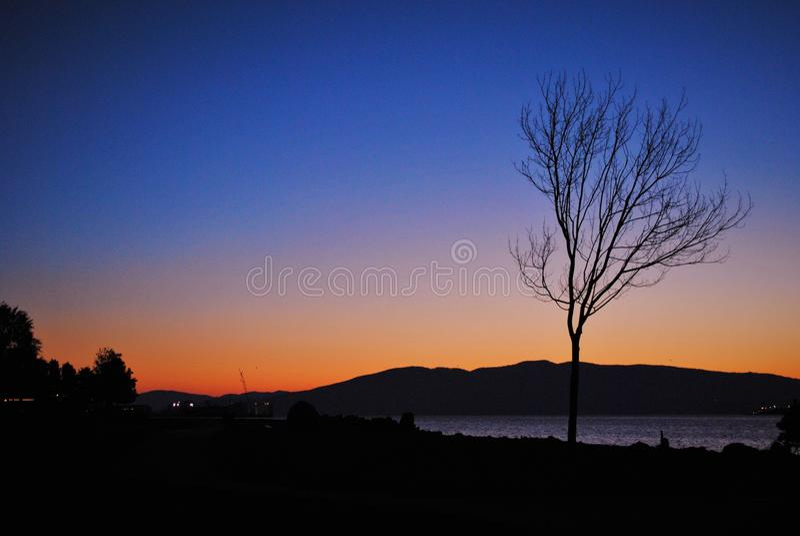 Arbre ébouriffé par le vent et coucher du soleil photo libre de droits