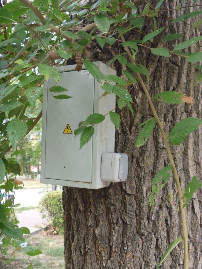 Arbre électrique photo libre de droits