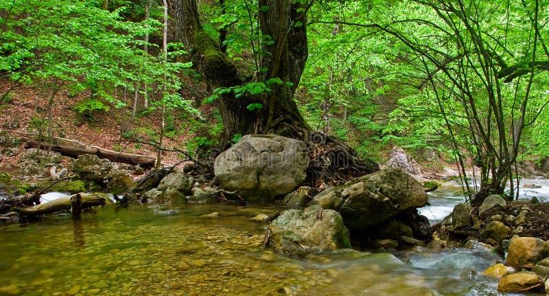 arbre énorme de fleuve images stock