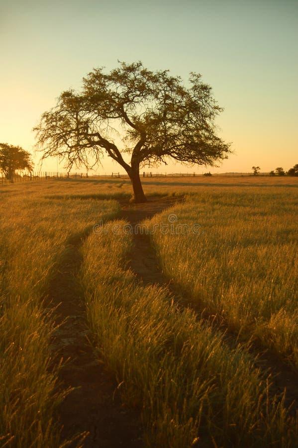 arbre 2 isolé photos libres de droits