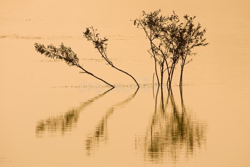 arbre photographie stock