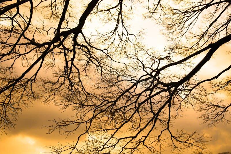 arbre photos stock