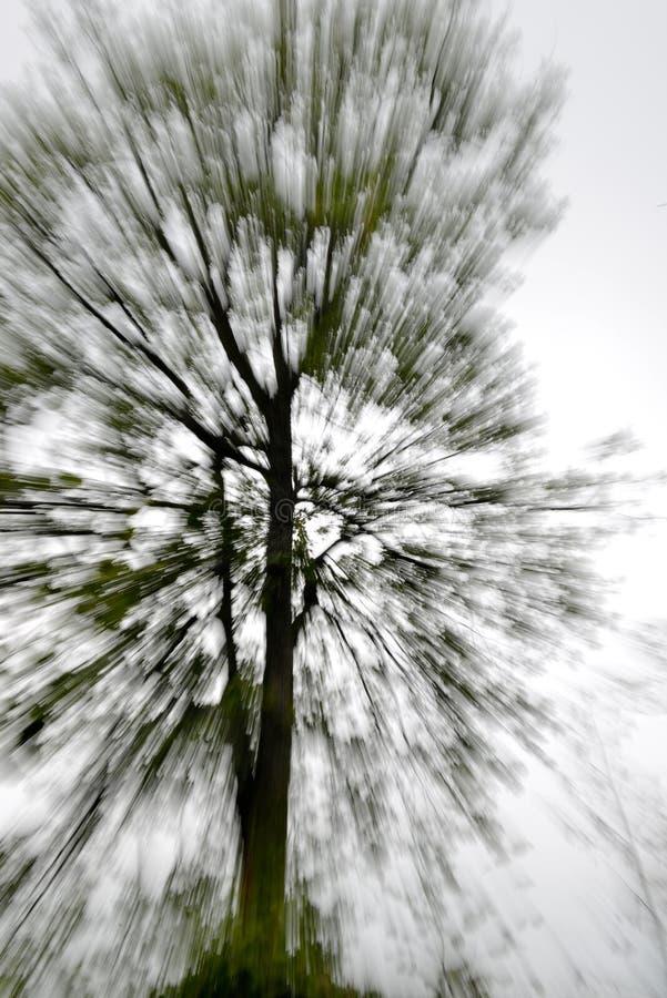 Arbre abstrait photo libre de droits