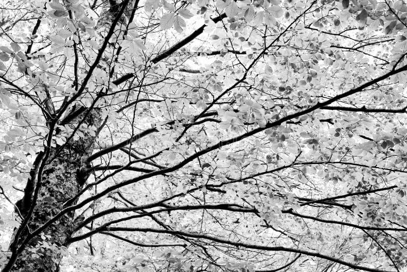 Arbre abstrait photo stock