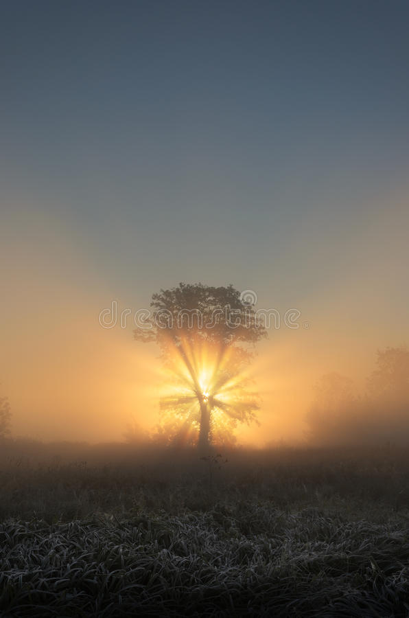 Arbre admirablement éclairé à contre-jour dans le paysage brumeux pendant le matin photographie stock