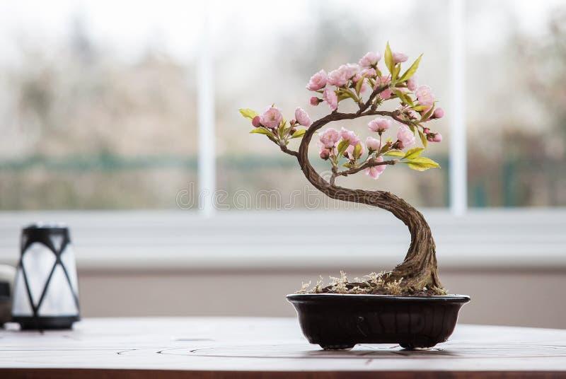 Arbre artificiel de bonsaïs avec des fleurs photographie stock libre de droits
