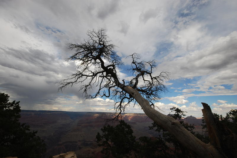 Arbre au canyon grand images stock