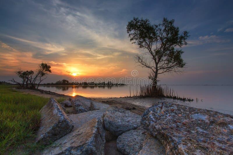 Arbre au coucher du soleil images libres de droits
