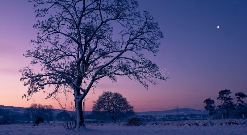Arbre au lever de soleil photo stock