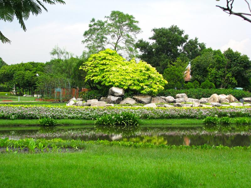 Arbre au parc et au beau fond photographie stock