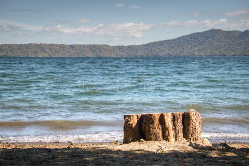 Arbre au rivage du lac Apoyo près de Grenade, Nicaragua photographie stock