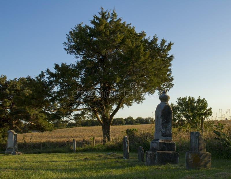 Arbre au vieux cimetière images stock