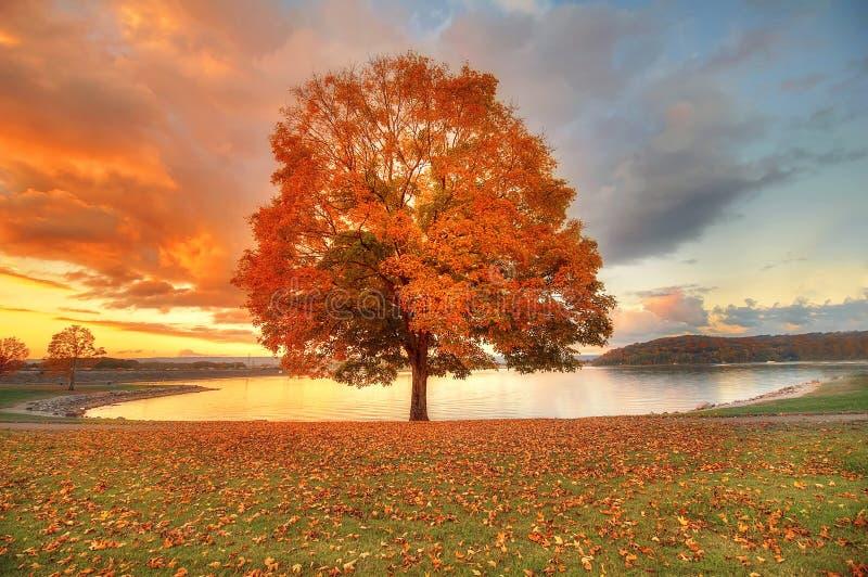 Arbre avec des couleurs d'automne images libres de droits