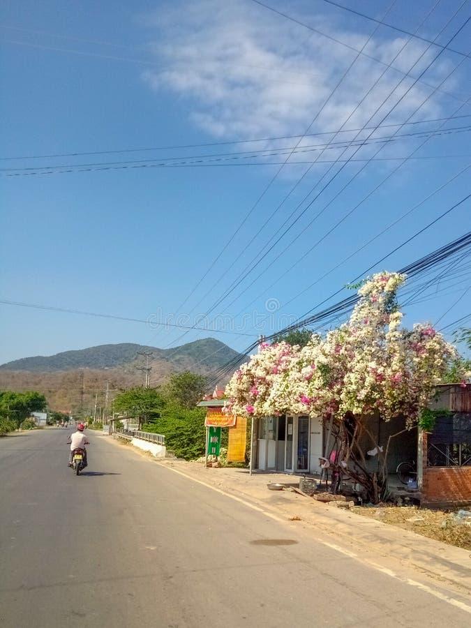 Arbre avec des fleurs sur un fond des montagnes photos libres de droits