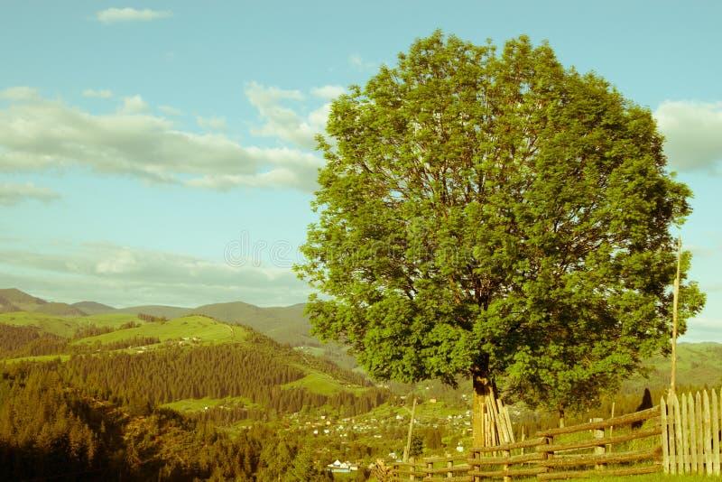 arbre avec du charme image libre de droits