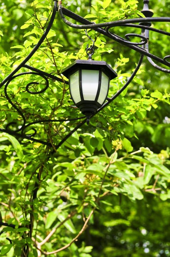 Arbre avec la lanterne photographie stock libre de droits