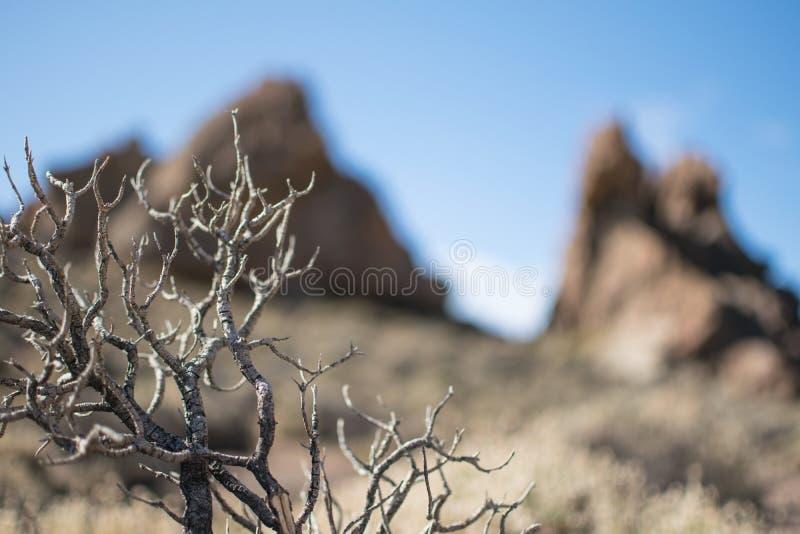 Arbre avec la montagne trouble à l'arrière-plan photo stock