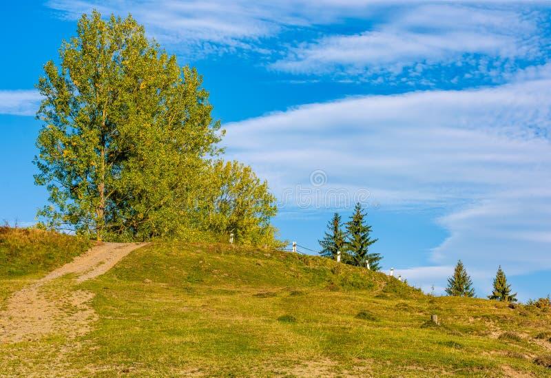 Arbre avec le feuillage jaune sur des collines dans la campagne photographie stock