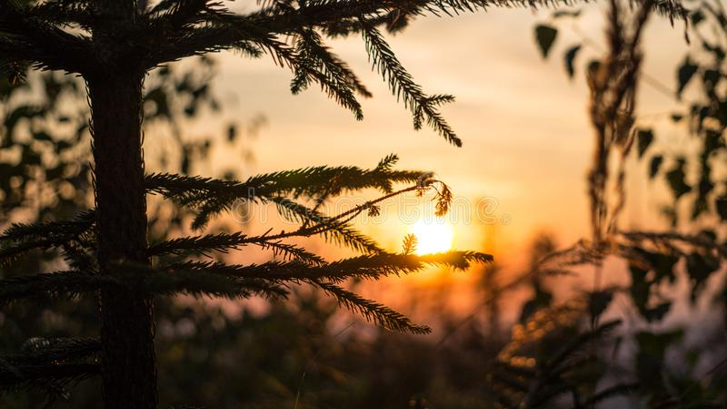 Arbre avec le fond de coucher du soleil image stock