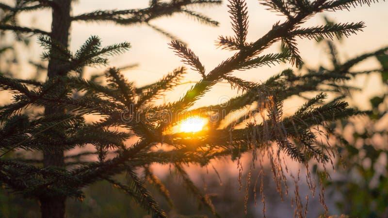 Arbre avec le fond de coucher du soleil images stock