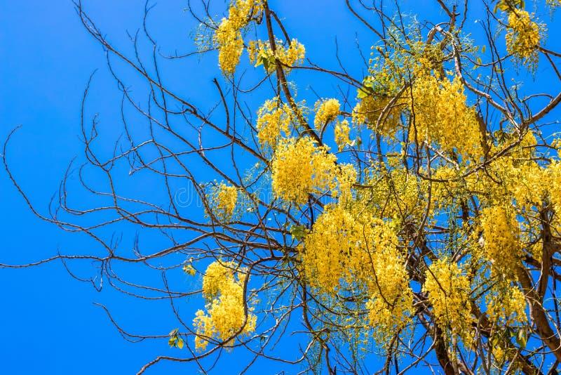 Arbre avec les fleurs jaunes contre le ciel photo stock
