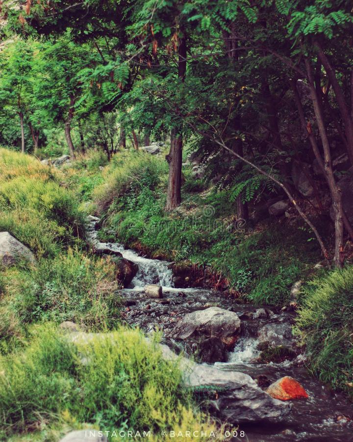 Arbre baltistan de chute de l'eau de Gilgit photographie stock libre de droits