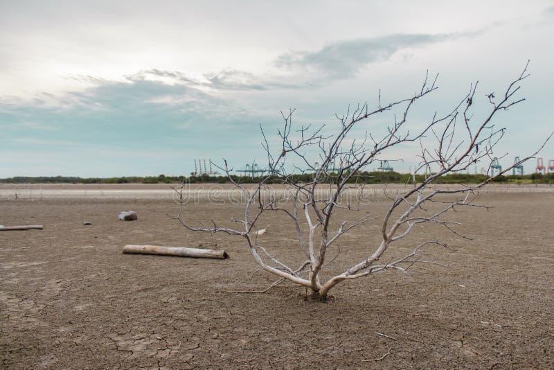 Arbre blème sur la terre sèche image stock